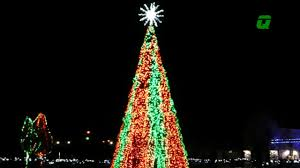 Zoo Lights Ohio by Wild Lights Tree At The Columbus Zoo Youtube