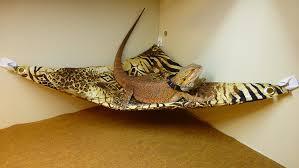 carolina designer dragons hammock for bearded dragons safari