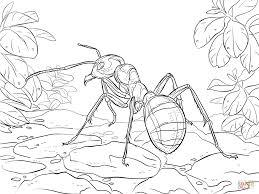 ants coloring pages wallpaper download cucumberpress com