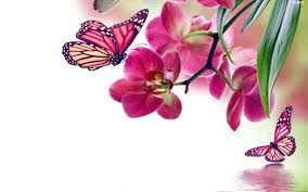 flowers butterflies animals orchids insects insects