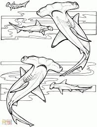 hammerhead shark coloring page samantha bell within hammerhead