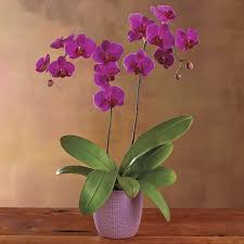 orchids care orchids care how to plant grow grow step by step