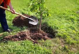 how to transplant a tree mnn nature network