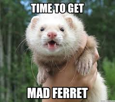 Ferret Meme - ferret