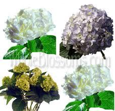 bulk artificial flowers buy wholesale hydrangeas flowers for sale in bulk