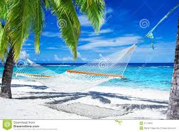 hammock between palm trees on tropical beach royalty free stock