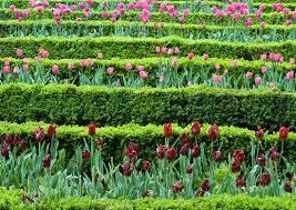 Backyard Flower Garden Ideas Triyae Com U003d Easy Backyard Flower Gardens Various Design