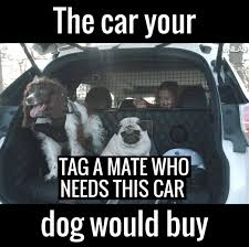 Dog In Car Meme - unilad this genius car is perfect for dog lovers it has
