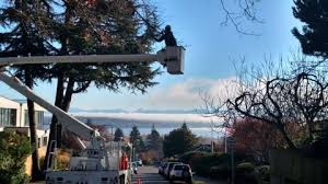certified arborist seattle wa seattle tree preservation