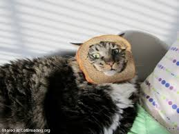 Cat In Bread Meme - south park cat breading and the struggle to stay relevant cat