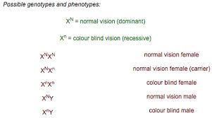Can A Female Be Color Blind Genetics Ogms Science