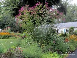 new york native plants plants to consider our fairfield home u0026 garden
