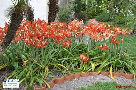 colorful plant beds for south florida and similar climates