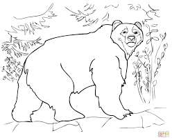 kodiak bear coloring page free printable coloring pages