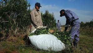 uatre nueva escala salarial para los trabajadores agrarios infoco la uatre será el único gremio con participación en el