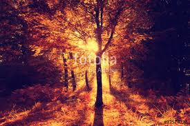 red orange color saturated halloween forest tree
