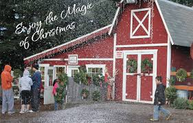 home helvetia christmas tree farm