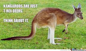 Kangaroo Meme - kangaroos are just t rex deers by boom meme center