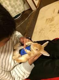 Phone Case Meme - the newest meme adorable bunnies as phone cases neatorama