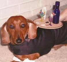 Halloween Costumes For Dogs Pet Halloween Costumes Handmade Diy U0027s And More The Cottage Market