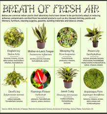 good inside plants house plants good for the environment good for the air