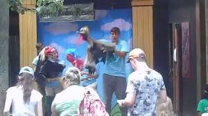 a puppet show at the bronx zoo aug 13 2015 youtube