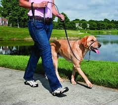 How To Get A Comfort Dog Amazon Com Petsafe Gentle Leader Head Collar With Training Dvd