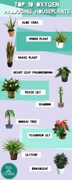 top house plants top 10 oxygen producing houseplants houseplants flower and plants