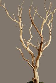 branches sanded 21 38