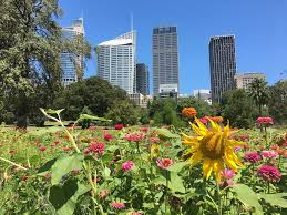 Sydney Botanic Gardens Sydney Botanic Garden Pop Up Wildflower Meadow