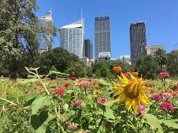 Botanic Garden Sydney Sydney Botanic Garden Pop Up Wildflower Meadow