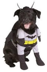 Batman Robin Dog Halloween Costumes 10 Completely Insane Super Hero Halloween Costumes Dog