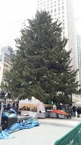 keeping your christmas tree healthy for the long haul