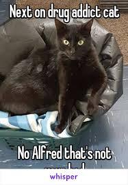 Drug Addict Meme - on drug addict cat no alfred that s not your