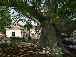 european tree of the year 2015