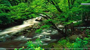 Tennessee national parks images Tremont great smoky mountains national park tennessee wallpaper jpg