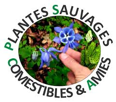 cuisiner les herbes sauvages plantes sauvages comestibles et médicinales jura escapades