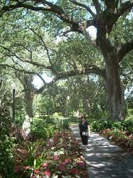 gorgeous trees picture of houmas house plantation and gardens