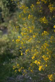 australia native plants 2249 best australian native plants images on pinterest native