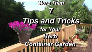 Herb Container Garden - more than 7 tips and tricks for your herb container garden real