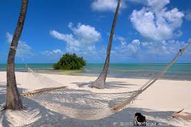 palm tree hammock beach florida keys by justin kelefas