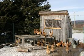 chicken coop plans winter 10 coop in the winter backyard chickens