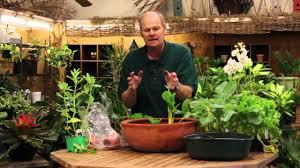 growing a vegetable garden indoors gardening ideas