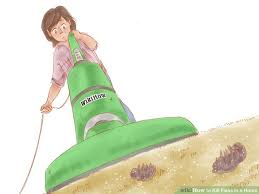 How Long Do Fleas Live In Carpet Can Fleas Live In Carpets Without Pets Carpet Vidalondon