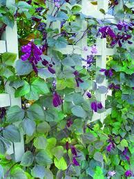 195 best g plants individual images on pinterest flower