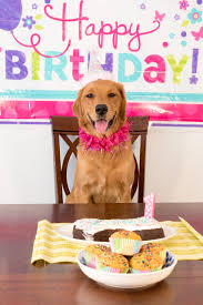 dog birthday party hosting a birthday party for your dog dog birthday party ideas