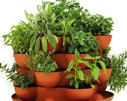 herb garden kit etsy