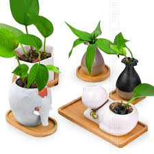 best planters wituse best price desktop bonsai pots bamboo stand flower planters
