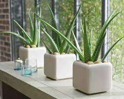 plantes dans une chambre 5 plantes d intérieur pour décorer la chambre à coucher et nous