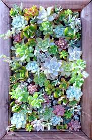 26 creative ways to plant a vertical garden succulents planters